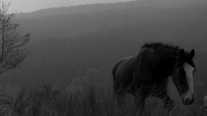 Symbolism, or just a nice shot of a horse in a field?